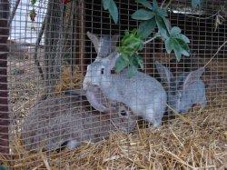 Bunnies for Mariah