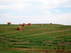 And for no reason, the Saskatchewan version of the Windows XP background